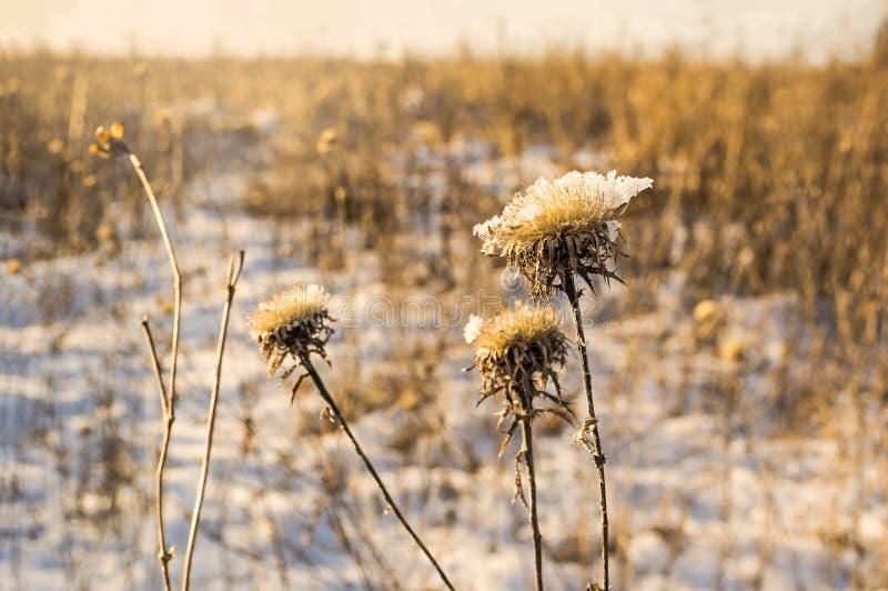 Djupfryst is täckte blomman på en kall vinterdag arkivfoton
