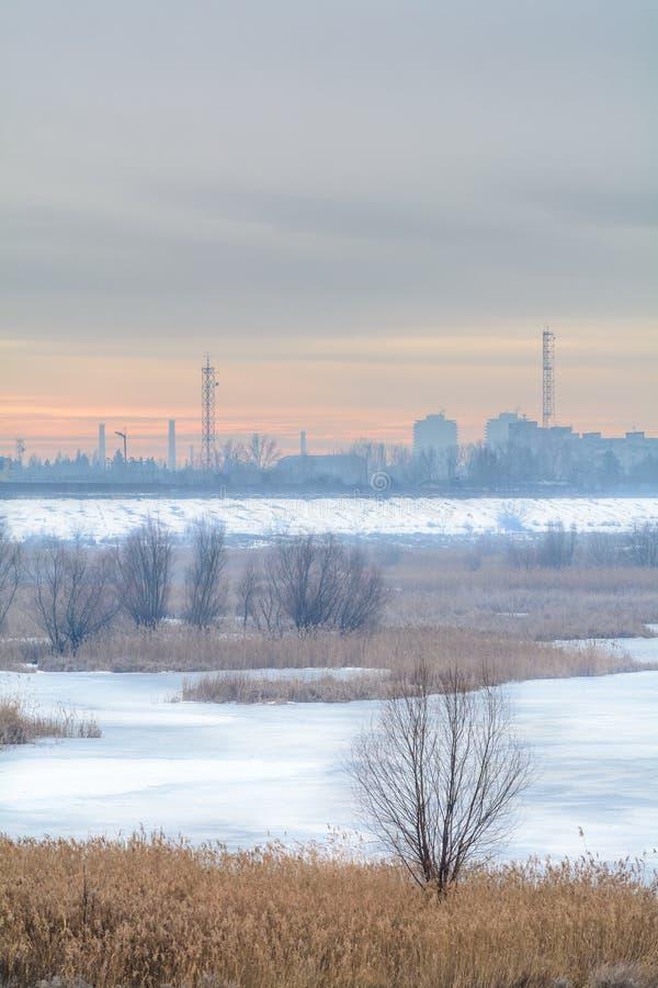 Djupfryst torrt gräs och kalt träd i snö över stadslandskap Wint royaltyfria bilder