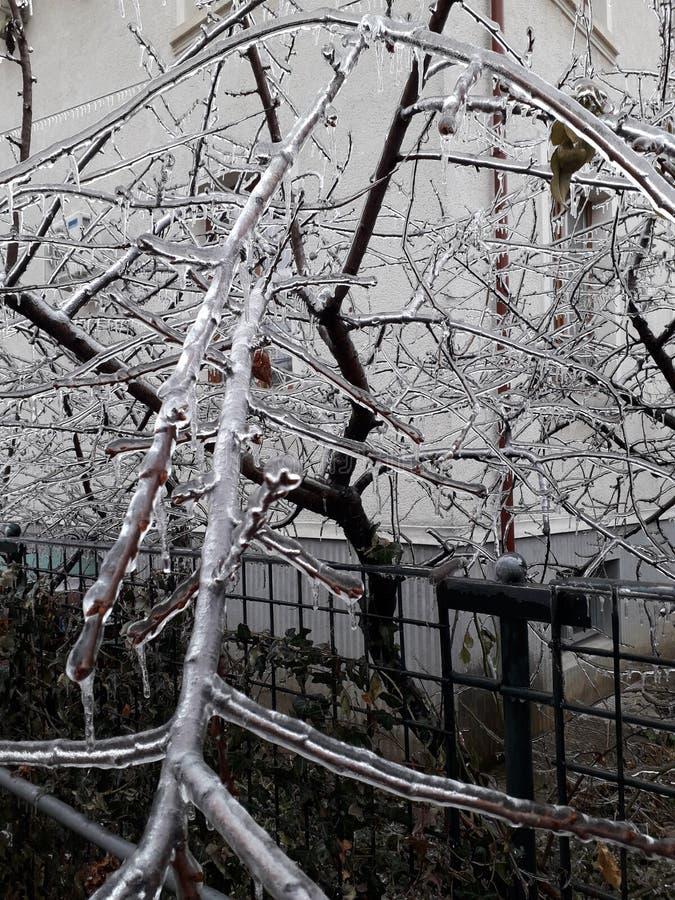 Djupfryst träd för naturisexponeringsglas arkivfoton