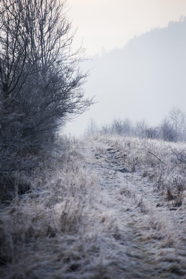 Djupfryst träd i mist royaltyfri bild