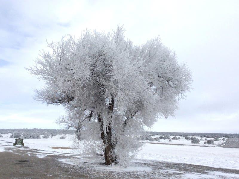 Djupfryst träd med snö på jordningen royaltyfri bild