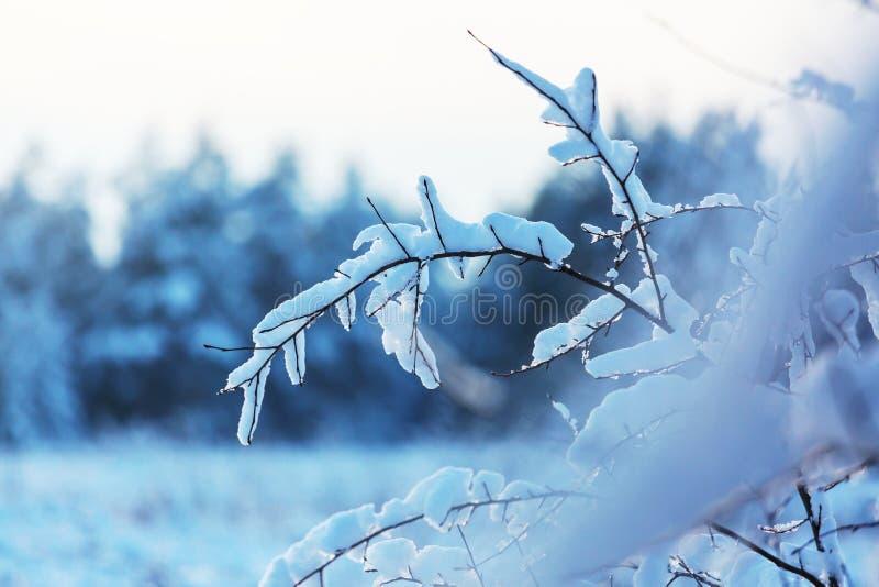 djupfryst tree arkivfoto