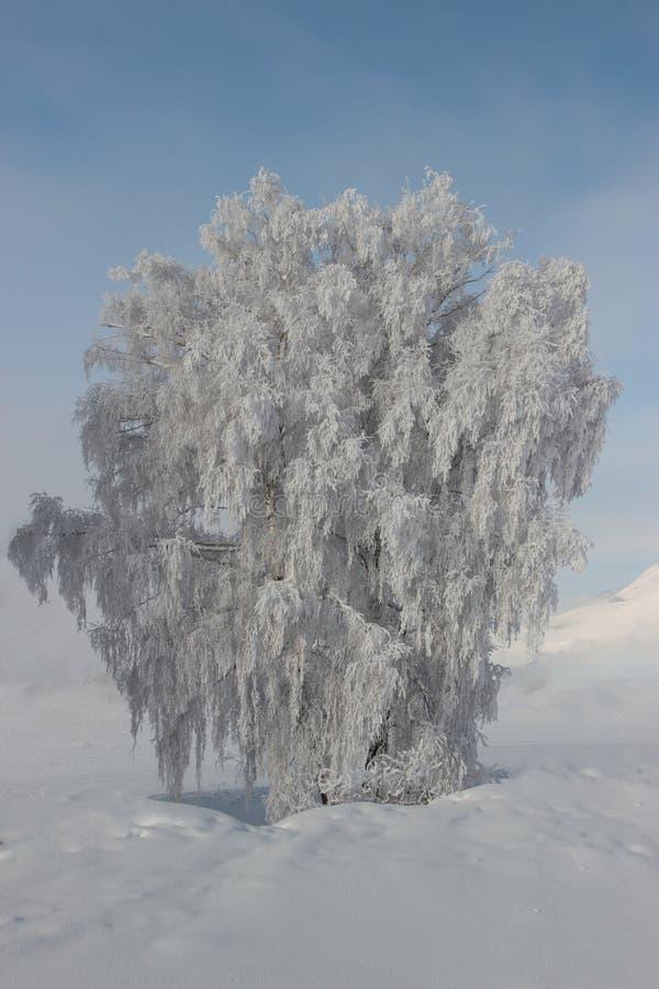 djupfryst tree royaltyfria bilder