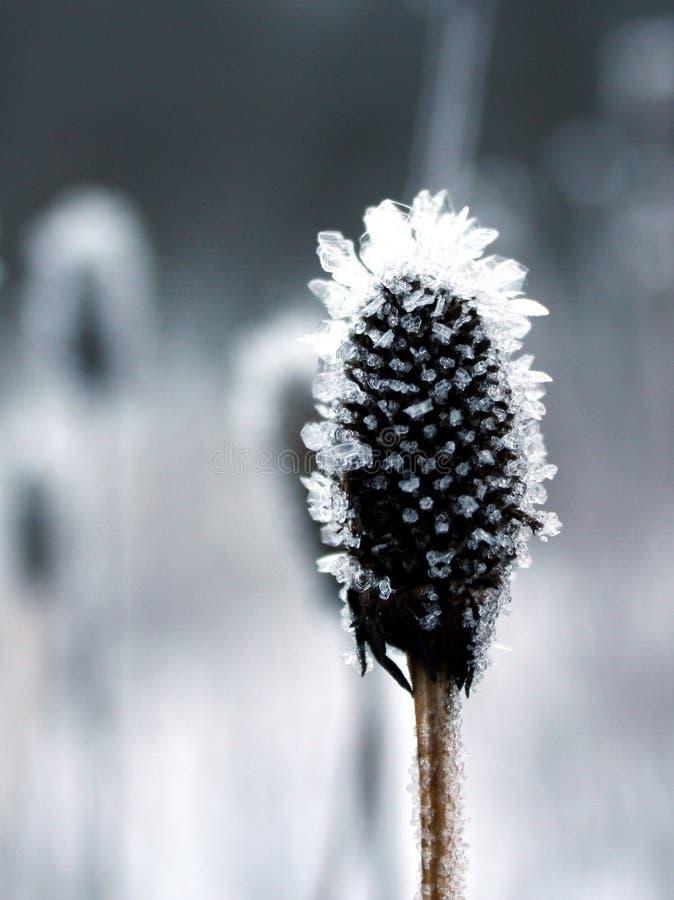 djupfryst växt royaltyfria foton