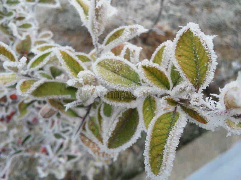 Djupfryst växt under vinterdagar arkivbilder