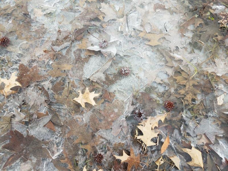 Djupfryst vatten eller is med sidor och gräs royaltyfri fotografi