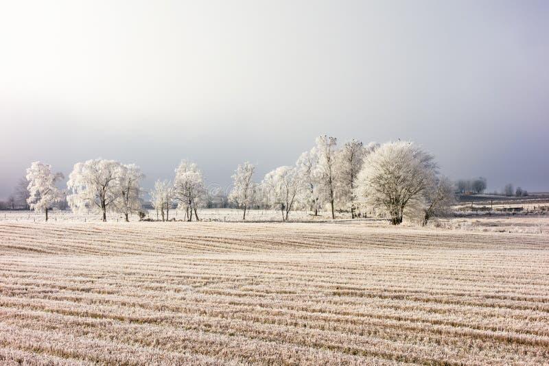 Djupfryst vinterlandskap royaltyfri foto