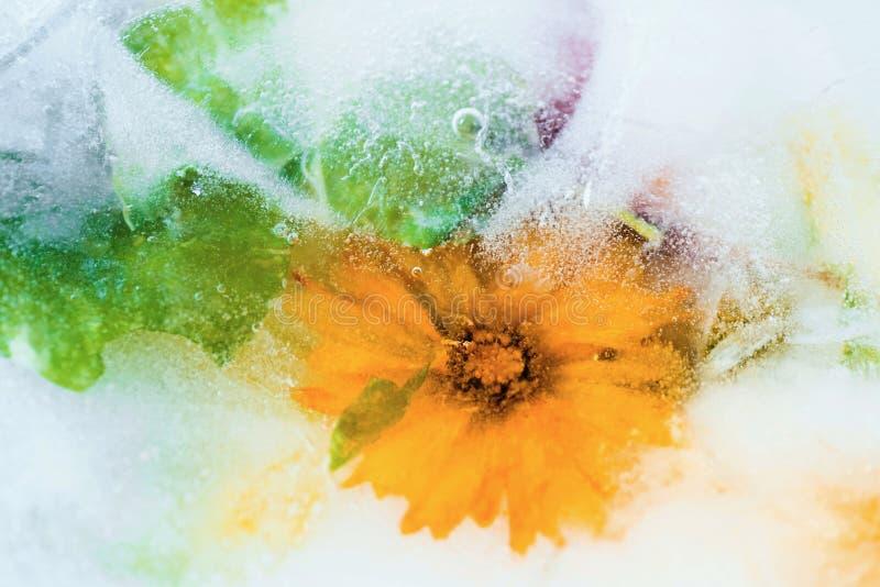 Djupfrysta blomstra blommor fotografering för bildbyråer