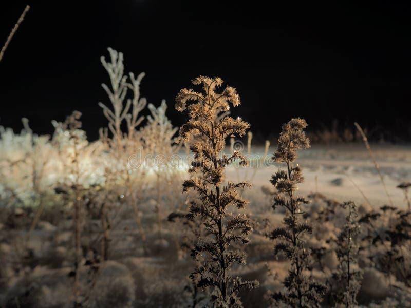 Djupfrysta nattblommor fotografering för bildbyråer