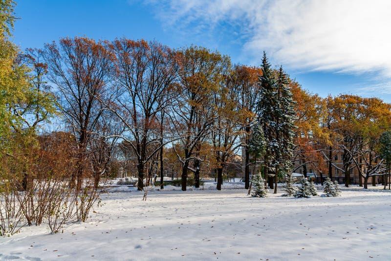 djupfrysta naturdetaljer trädfilialer och gräs i snö fotografering för bildbyråer