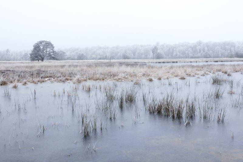 Djupfrysta sjöar och ensamt träd på leersumseveld i vinter arkivbilder