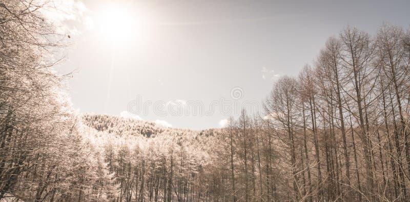 Djupfrysta träd i vinter med blå himmel (den bearbetade filtrerade bilden royaltyfria foton