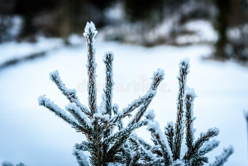 Djupfrysta träd som täckas av snö- och iskristaller i vinter arkivfoto
