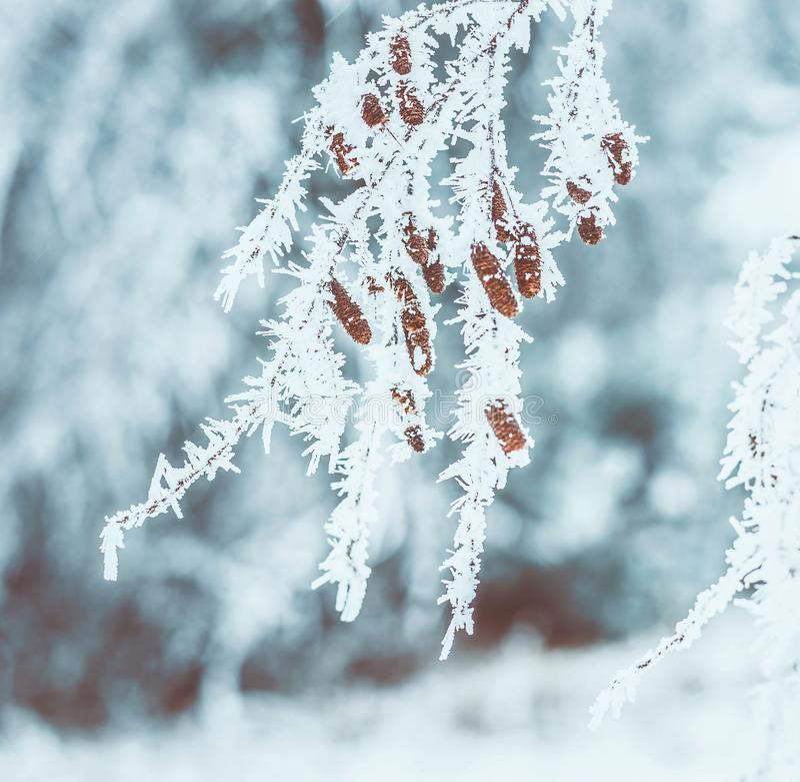 Djupfrysta trädfilialer med utomhus- vinter för snö och för rimfrost arkivfoto