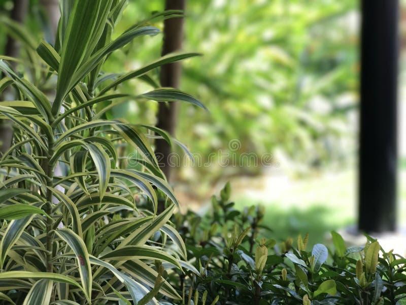Djupt - grönt gräs Skönhetträd royaltyfria bilder