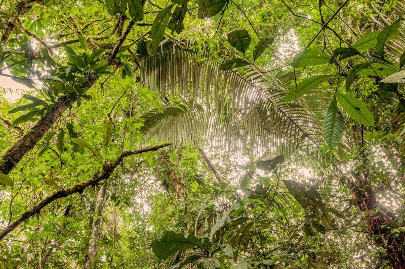 Djupt i den ecuadorianska täta djungeln royaltyfria bilder