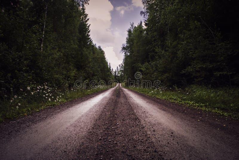 Djupt perspektiv av grusvägen till och med skog royaltyfria foton