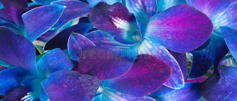 Djupt - purpurfärgad orkidé fotografering för bildbyråer