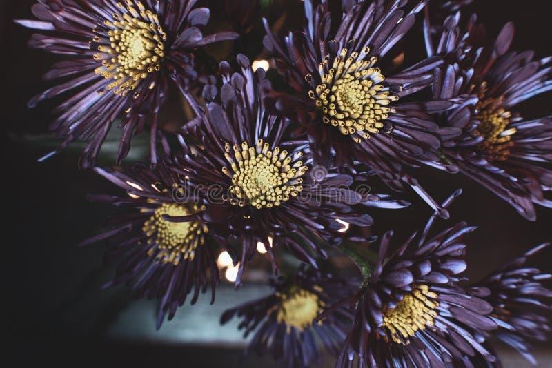 Djupt - purpurfärgade blommor på svart bakgrund royaltyfri fotografi