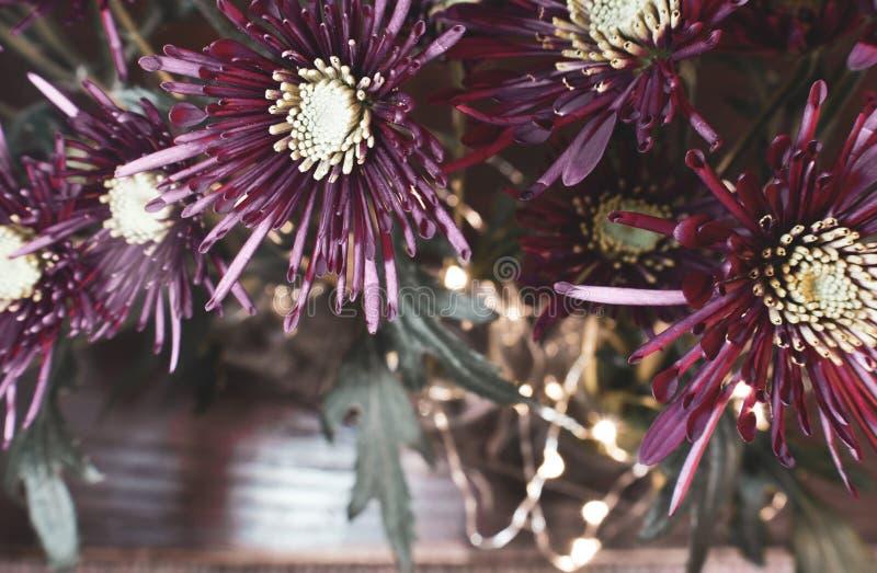 Djupt - purpurfärgade blommor på svart bakgrund arkivfoto
