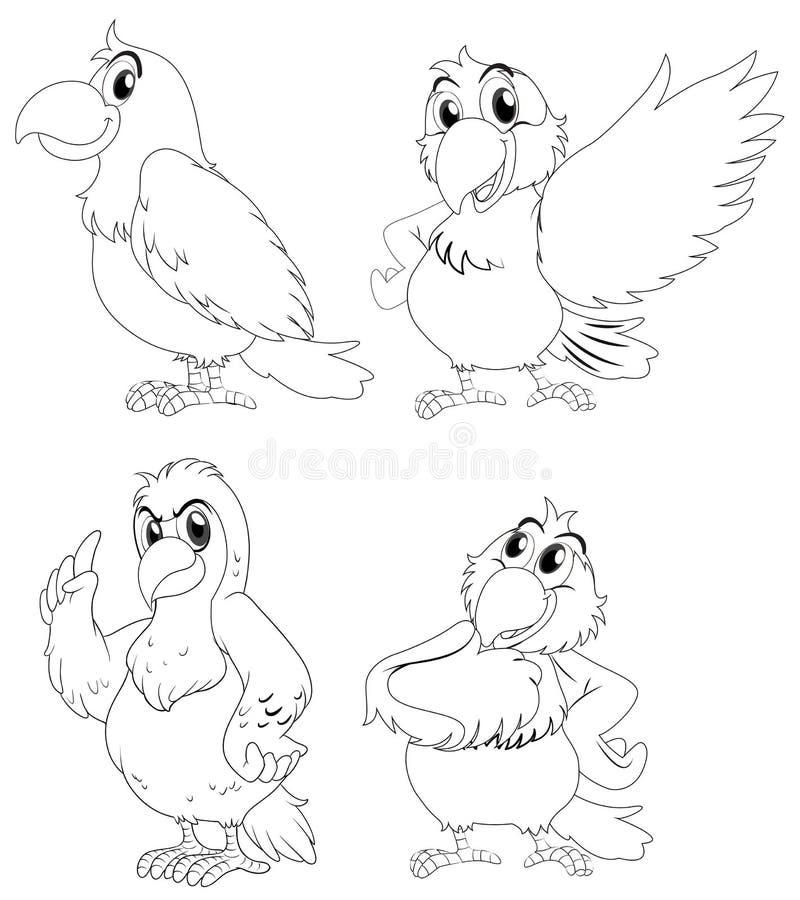 Djur översikt för papegojafåglar vektor illustrationer