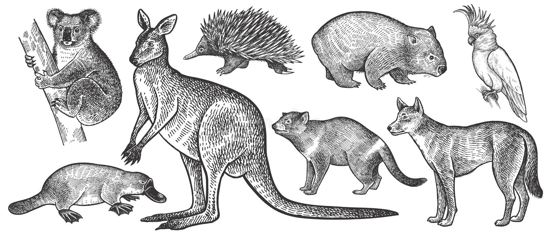 Djur av den Australien uppsättningen arkivfoto