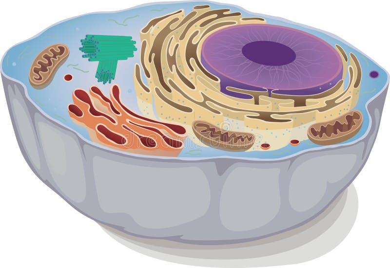 Djur cell royaltyfri illustrationer