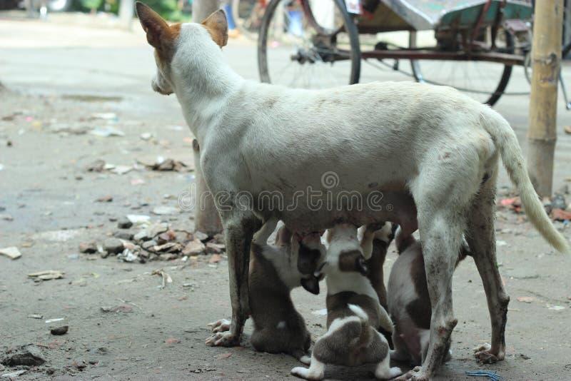 Djur förälskelse royaltyfria foton