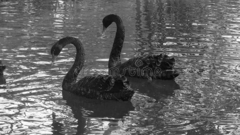 Djur förälskelse fotografering för bildbyråer