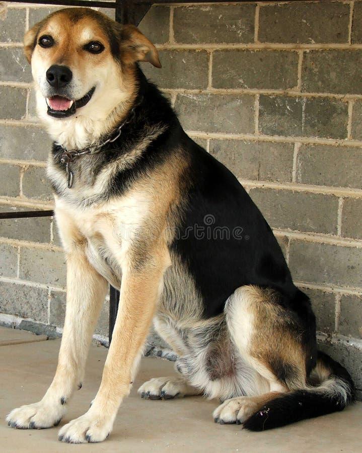 djur hund arkivbilder