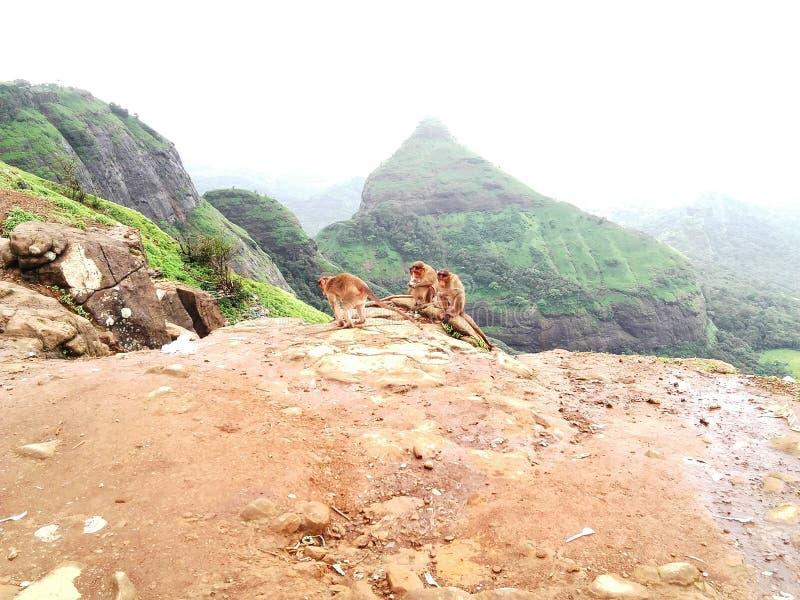 Djur i natur arkivbilder