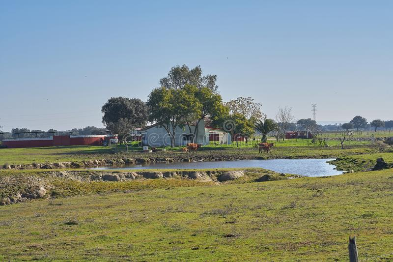 Djur lantgård med kor och sjön royaltyfria foton