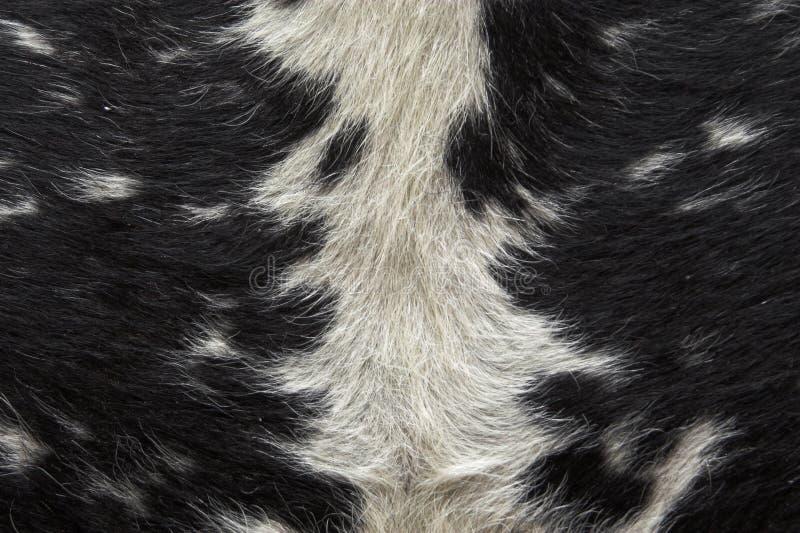 Download Djur modell arkivfoto. Bild av textur, filt, garnering - 511618