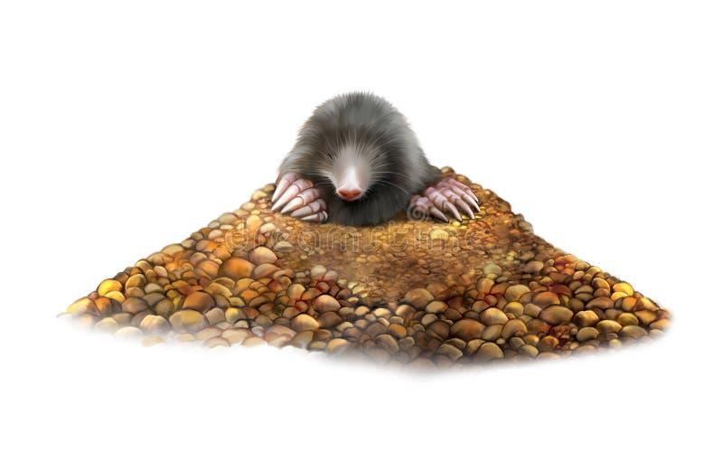 Djur Mole i mullvadshögvisningjordluckrare royaltyfri fotografi