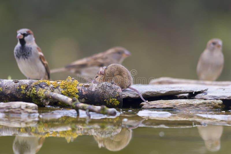 Djur på lunch, fågeln och musen arkivbild