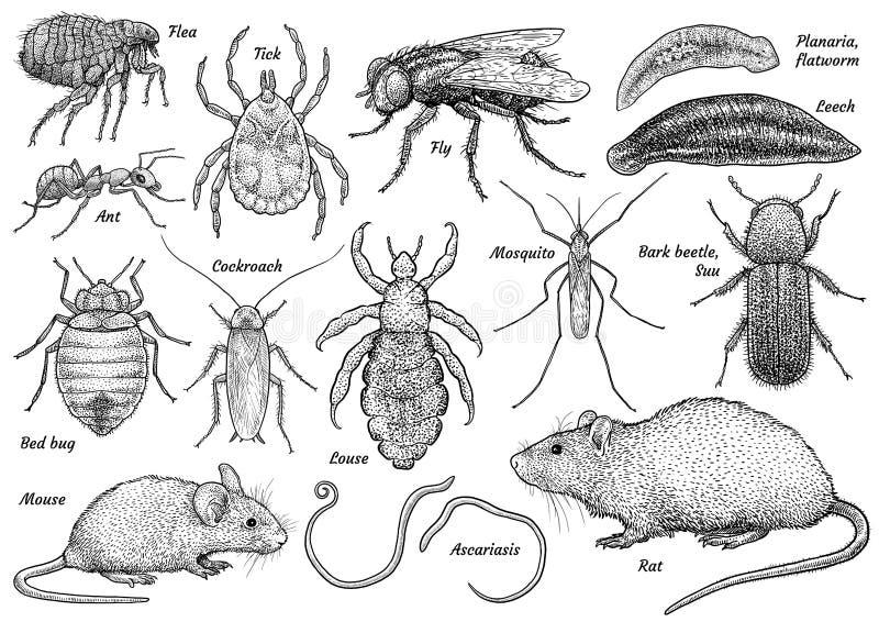 Djur samling för plåga, illustration, teckning, gravyr, färgpulver, linje konst, vektor royaltyfri illustrationer