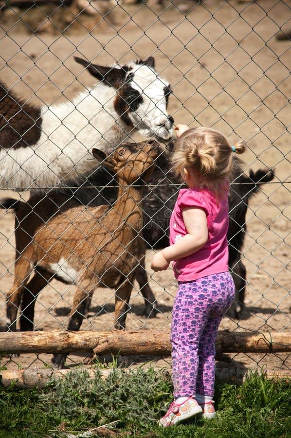 djur som matar flickan royaltyfri foto