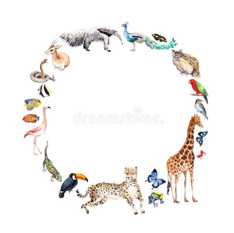 Djur - zoo, djurliv - antilop, uggla, gecko, papegoja, annan Kransram för djur dag vattenfärg royaltyfri illustrationer