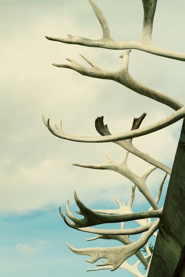 Djura horn på himmelbakgrund som tonas lätt royaltyfria bilder