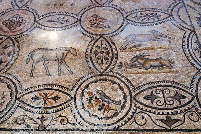 Djura mosaiker inom Basilika di Aquileia royaltyfria foton