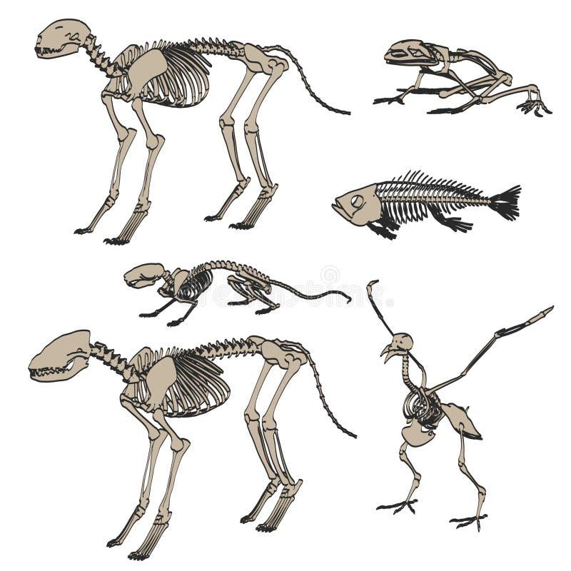 Djura skelett vektor illustrationer