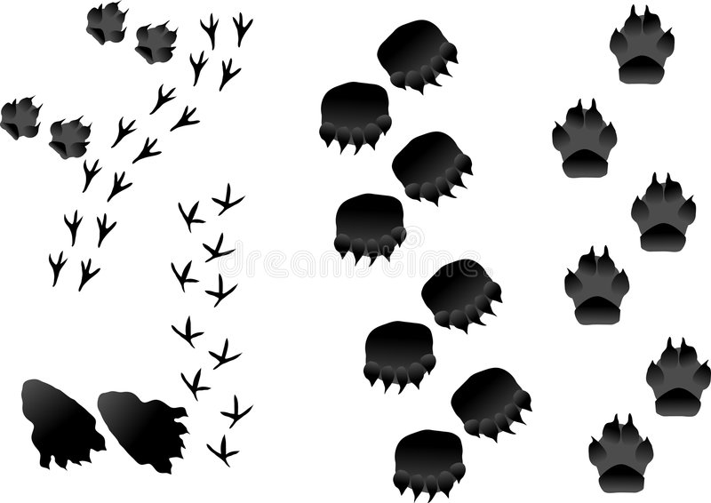 djura spår royaltyfri illustrationer