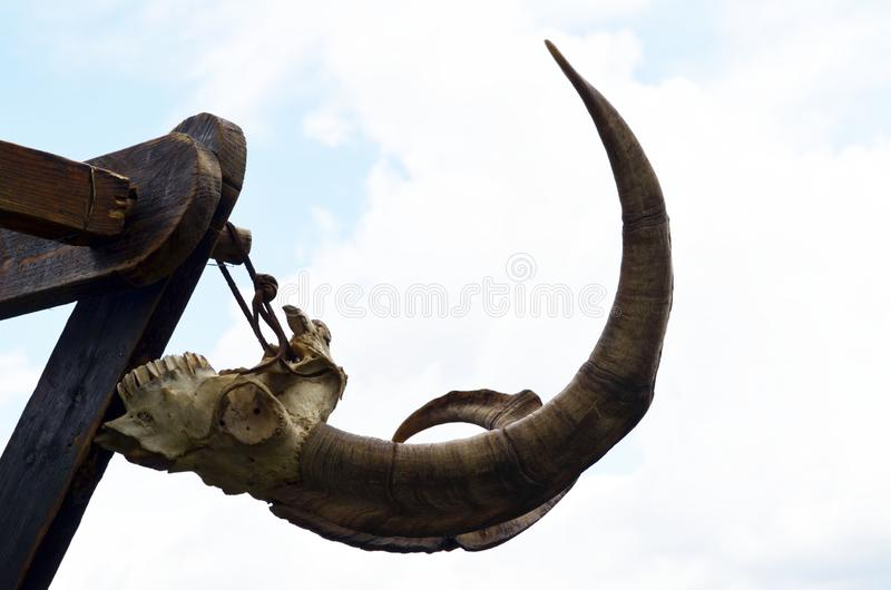 Djura stora horn, kopieringsutrymme arkivfoto