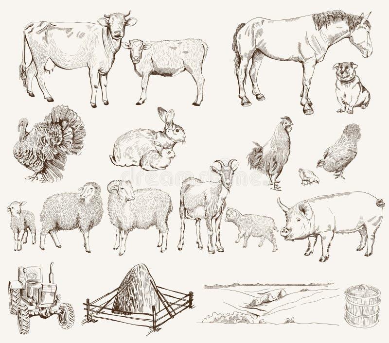 djurlantgårdliggande sommar för många sheeeps stock illustrationer