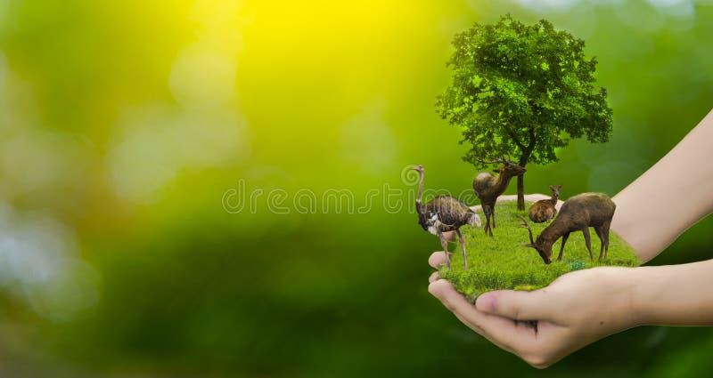 Djurlivbeskyddhjortar, strutsen, global uppvärmning, ensamhet, ekologi, människahänder, kan skydda djurliv, träd i handen, li royaltyfria bilder