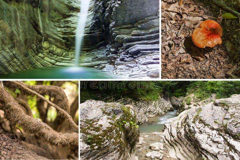 Djurlivcollagevattenfallet i för kanfasvatten för grottan det buktiga trädet för den azura champinjonen rotar bergfloden royaltyfria foton