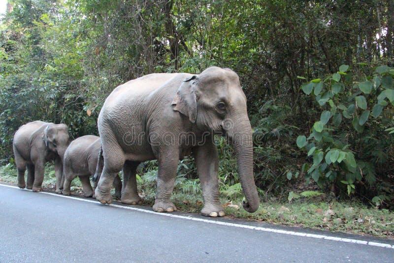 Djurlivelefantfamilj i skog royaltyfri fotografi