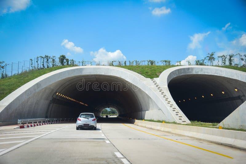 Djurlivkorsning över på huvudvägen i hastighet för bil för trafik för tunnel för skogväg på gatan - bro för djur över en huvudväg royaltyfri fotografi