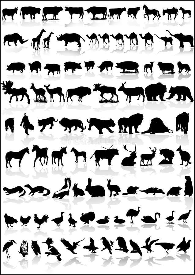 djursamling vektor illustrationer