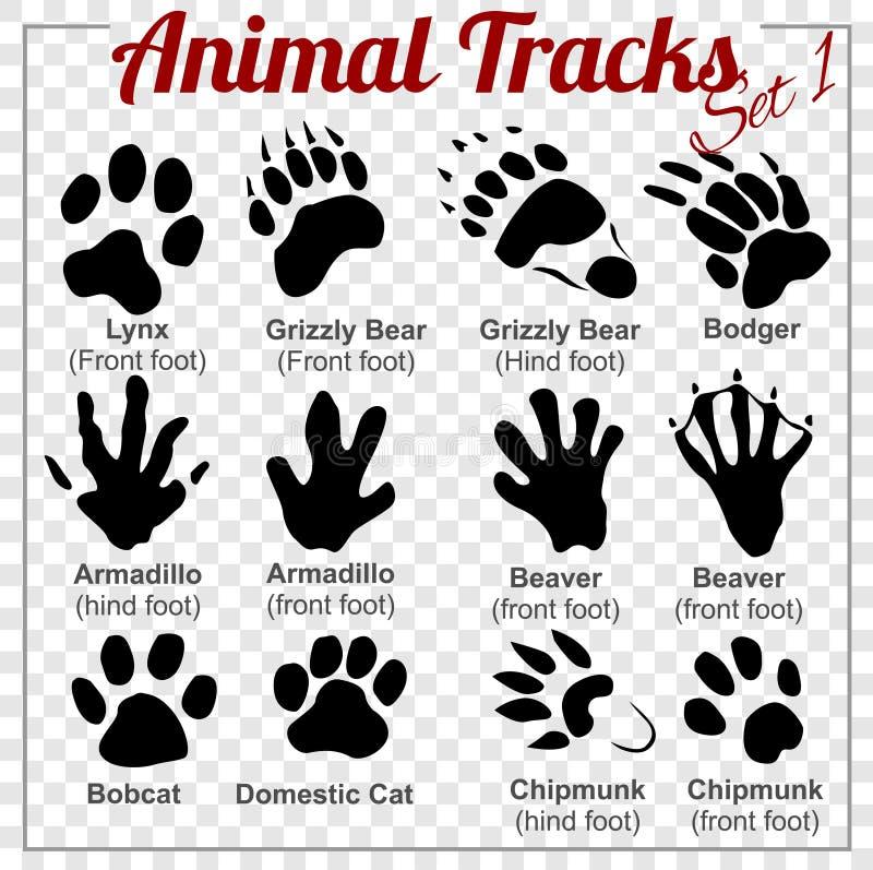 Djurspår - vektoruppsättning vektor illustrationer